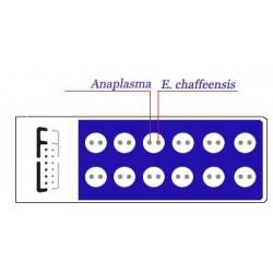 Ehrlichia/Anaplasma 2-antigen MIF IgG Kit