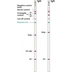 Bordetella pertussis ViraStripe® IgA Test Kit, 50 tests